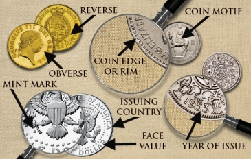 Mønt-anatomi